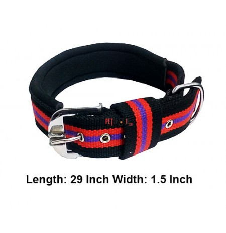 Multicolor Padded Dog Collar