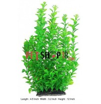 Dense Ambulia Plant Large Green