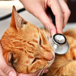 Are You Aware Of Common Cat Diseases