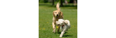 Ten Effective Ways To Keep Pets Healthy!!