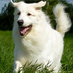 Complete Solution Of Hair-fall & Skin Infection In Dogs
