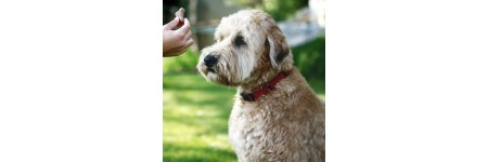 Secrets To Be Mind While Dog Training