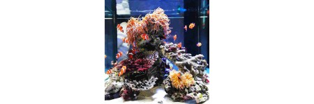Ways To Clean Your Aquarium..