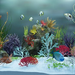 The Difference Between Freshwater And Saltwater Aquariums