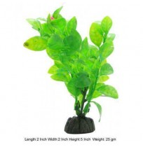Aquascaper Aquarium Plant Lysimachia W Flower Mini