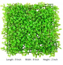 Bacopa Monary Mat Aquarium Background