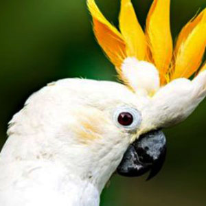 Are You Ready for a Pet Bird?