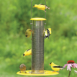 Make Your Interesting Feeders For Birds Your Own..