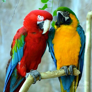 Hey Parrots Train Your Parents To Start Training You