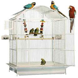 Keep Your Bird Cage Infection Free