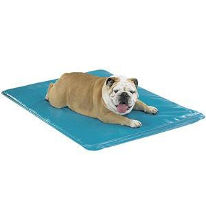 Cooling Pet Beds Therapeutic Solutions For Those Hot Summer Months