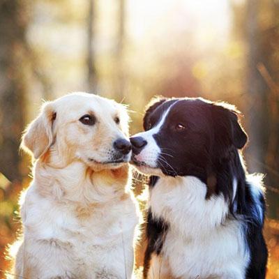 Petshop18 Pet Shop In Delhi Pet In Gurgaon Pet Shop Online