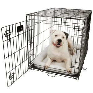 Crate Training is a kindness