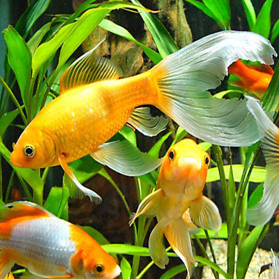 Fish blog for Fish tank care