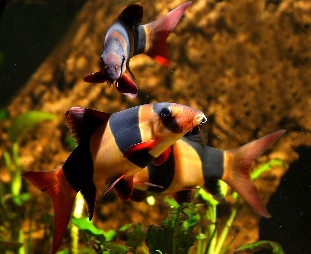Fish aquarium in gurgaon - Aquarium Care For Freshwater Fish