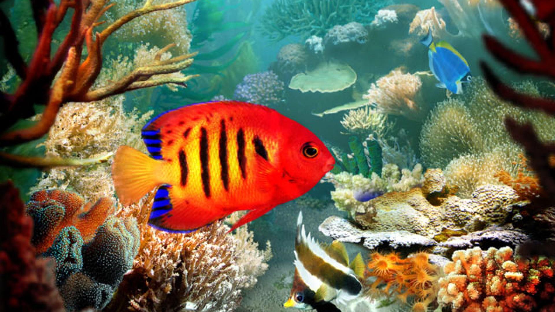 Fish-Blog