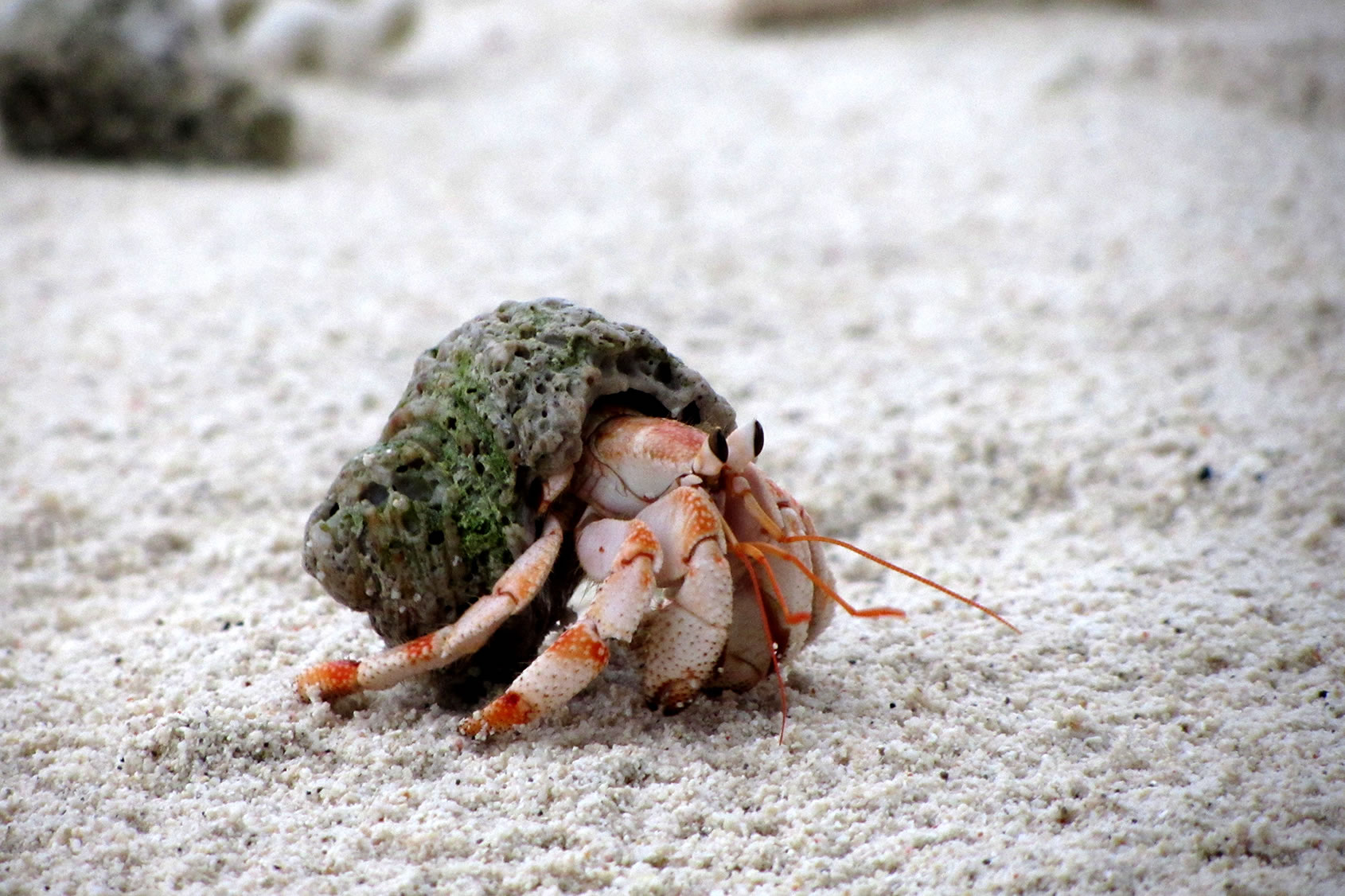 Choosing a Home for Your Hermit Crab