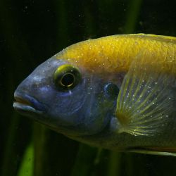 White Spot Disease In Fishes: Symptoms And Cures