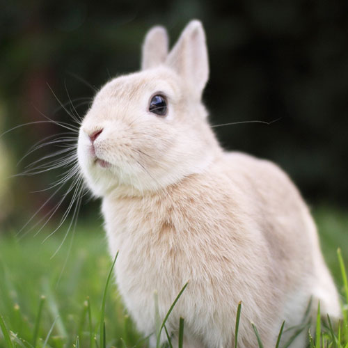 Bad Rabbit Behavior - Some Common Rabbit Problems Addressed.