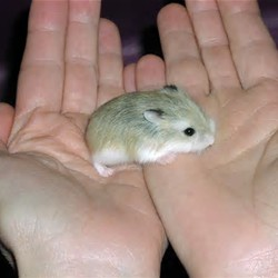 This Is How To Lift Up Your Baby Hamster..