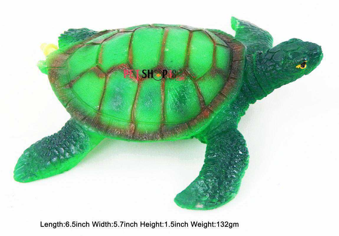 Fish aquarium in chandigarh - Green Turtle
