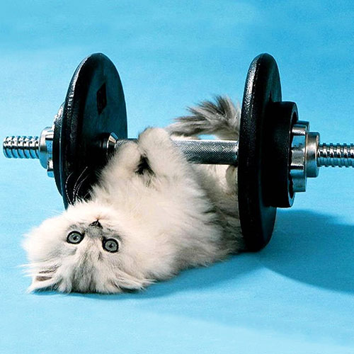 Exercise for Cats