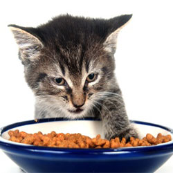 Your Kitty Will Love You More, When You Follow This Guide To Feline Feeding