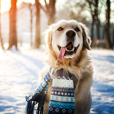 15 Winter Care Tips For Your Dog